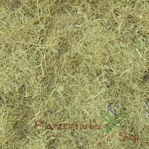 Bartflechte / Usnea barbata Lichen 100g