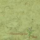 Gallapfelpulver / Gallae Pulvis 100g