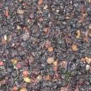 Holunderbeeren / Sambuci ebuli Fructus 100g